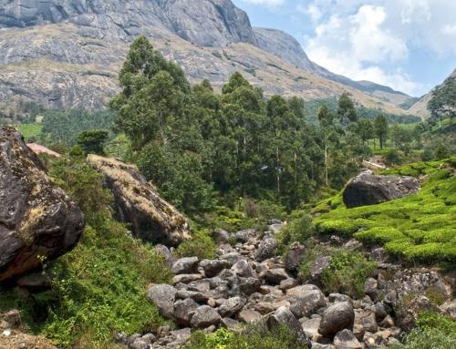 Investigando el Ayurveda en Kerala