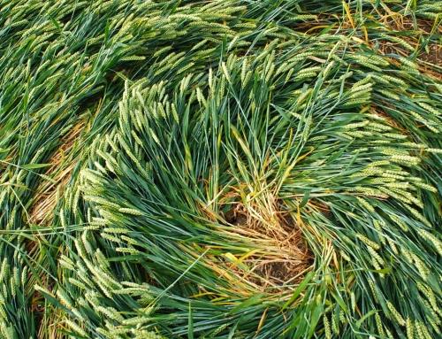 Fotos: Crop Circles